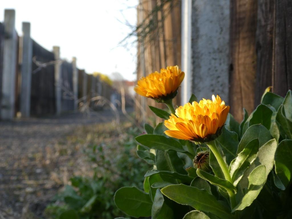 Mauerbluemchen_1024